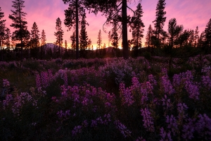 Deschutes National Forest Night Photography Workshop